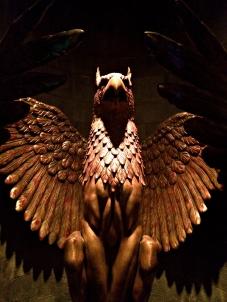 harrybird